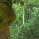 Massive Ancient Stone Face Revealed in the Amazon Rainforest