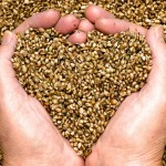 7 Super Seeds that Will Change Your Health