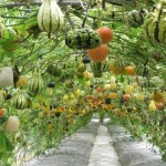 Permaculture Transforms a Small Space into a Food Forest