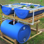 5 Tips to Help You Get Started With Aquaponics