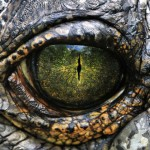 An Interview with a Reptilian Being