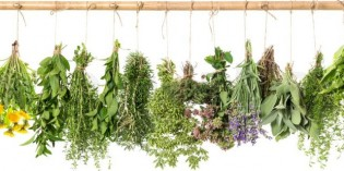 Simple Herbal Remedies for 4 Very Common Problems
