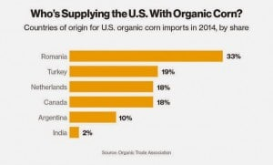 organic corn supplies