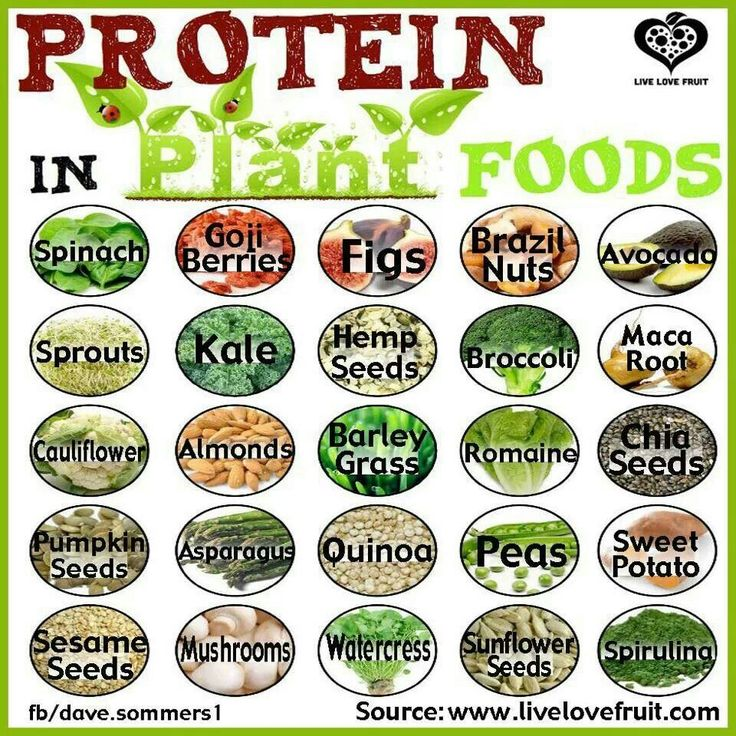 Top 25 Plant Based Protein Sources