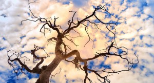 Dying Trees Sky