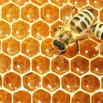 Gardening Products Giant to Stop Selling Insecticide Linked To Bee Deaths