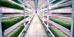 Entrepreneurs Transform a WWII Bomb Shelter into World's First Underground Farm