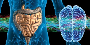 Why and How Your State of Mind Affects Your Gut, and Vice Versa!