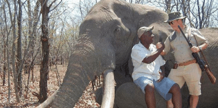 Iconic Giant Elephant Shot Dead by Trophy Hunters in Zimbabwe