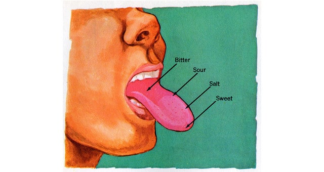 That Nifty Little Map Of Taste Buds On The Tongue You Learned In