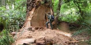 Tree Poaching – The Latest Trend in Crimes Against Nature