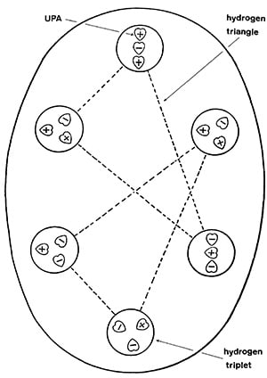 "Figure 1. The hydrogen ""micro-psi atom."" The UPAs are the heart-shaped objects designated a plus or minus sign denoting either an inflow (minus) or outflow (plus) of energy. Stephen M. Phillips argues that each triangle is a single hydrogen nuclei and that the micro-psi observation has somehow bonded two together. The mid-sized circles are therefore quarks, and the heart-shaped entities sub-quarks. (Source: Occult Chemistry by Annie Besant and C.W. Leadbeater.)"