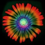 The World Is Rediscovering the Medical Benefits Of Psychedelic Plants