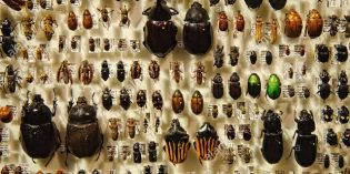 Not Just Bees, All Insects are in Decline and Heading for Extinction