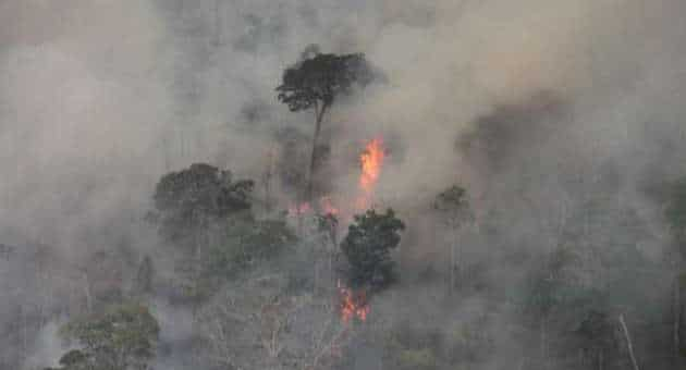 Brazil Forest Fires 4