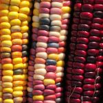 The World's Food Seeds are Going Extinct, but You Can Help