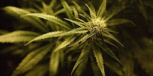 Cannabis Prohibition Insults Thousands of Years of Use of This Sacred Plant