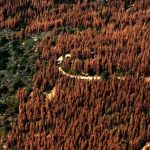 Not Just Bees, Trees Are Dying Off at an Alarming Rate With Little Public Attention