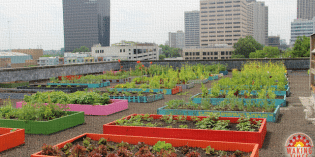 Homeless Activists Go Organic, Feed an Entire Shelter with Rooftop Garden