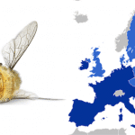 Europe is on the Brink of Completely Banning Bee-Killing Insecticides
