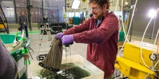 Video: Super Absorbent Sponge Revolutionizes Oil Spill Cleanup