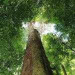 Small Victory in Indonesia as Rainforests Returned to Indigenous Control