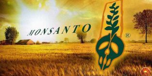 Evidence Mounts EPA Colluded with Monsanto to Hide Cancer Concerns