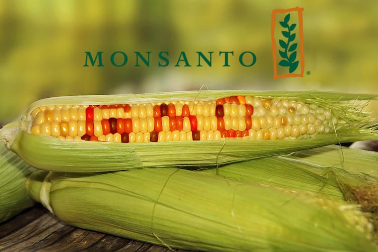 GMO's Just Got a Lot More Frightening with Approval of New Monsanto Product Monsanto-Corn