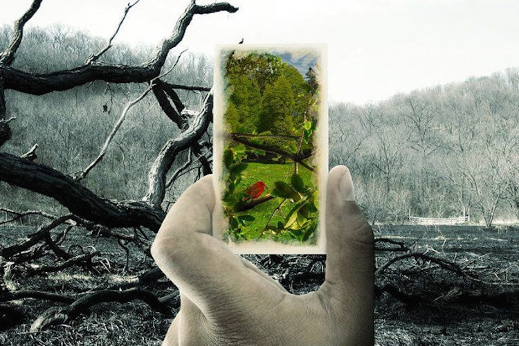 damage of the environment Plastic and the environment plastics are used throughout the world for a broad number of reasons although plastic is certainly a globally important product, there are many environmental concerns associated with its use.
