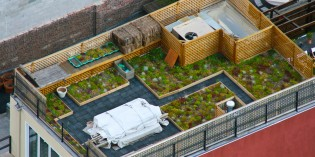 New York City Could Open up 1,200 Acres of Rooftops for Farming