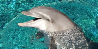 Freedom! Switzerland Bans Dolphins in Captivity