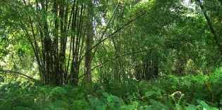 Indian Man Single-Handedly Plants a 1,360 Acre Forest
