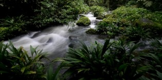 Stranded: The Children's Eternal Rainforest (Video)