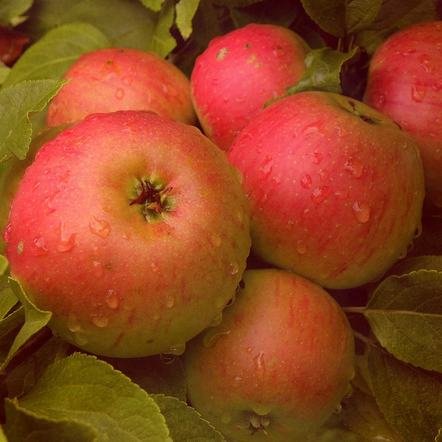 Flickr – Apple – ✿ nicolas_gent ✿
