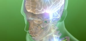 Flickr - Brain - Polygon Medical Animation1