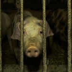 The New Slavery: Pigs are Tigers and Farmers are Felons