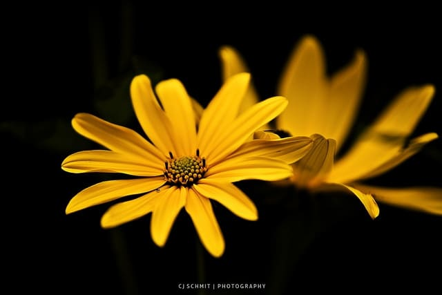 Flickr - Flower - CJ Schmit1