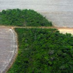 WIKI - Deforestation in Brazil