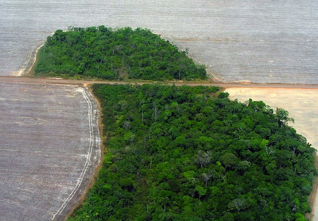 WIKI – Deforestation in Brazil
