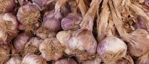 Flickr - Garlic - havankevin