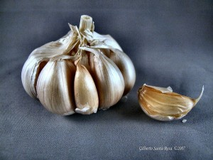 Flickr - Garlic - SantaRosa OLD SKOOL