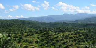 Palm Oil and Our Future