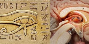 What is the Pineal Gland, and How to Detox It