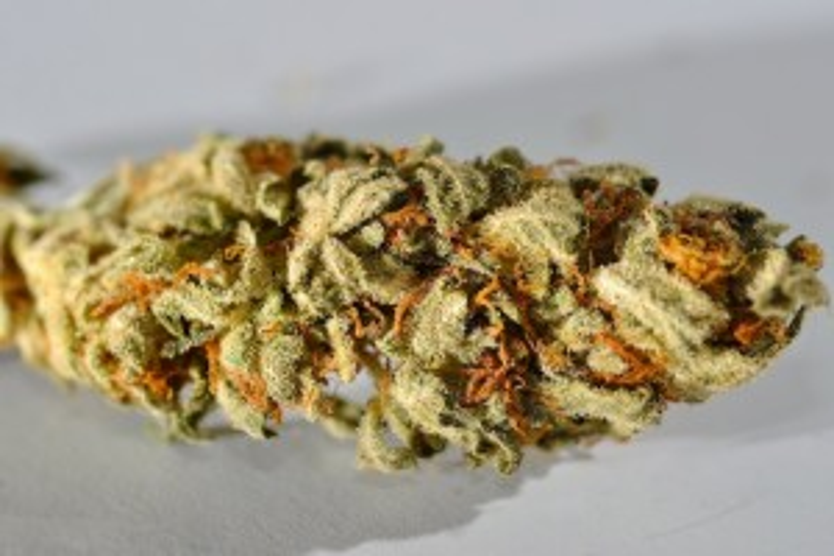 WIKI-Cannabis-Sativa