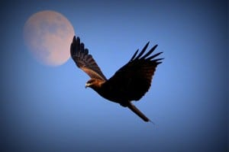 Flickr - In Flight - Ali - Arsh
