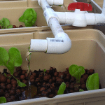 A Brief Introduction to Aquaponic Gardening