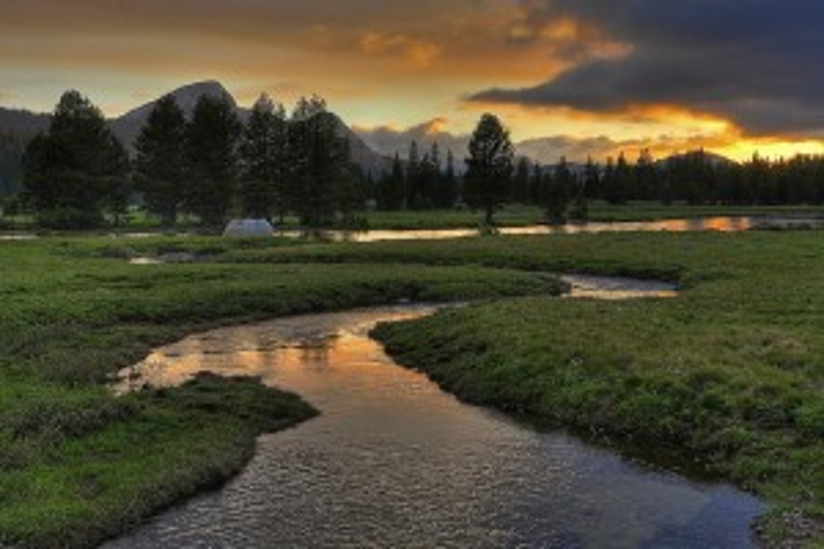 Flickr - Wilderness - SteveD.