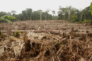 James Ficklin - Palm Oil Clear Cut