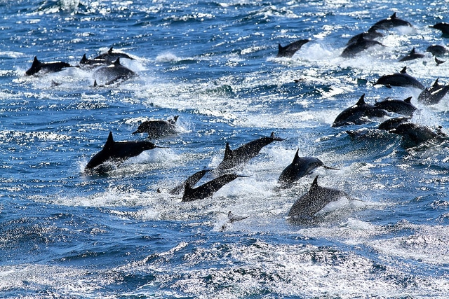 Dolphins Gain Unprecedented Protection in India