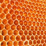 Honey – The Perfect Antibiotic Capable of Solving The Problem of Antibiotic Resistance